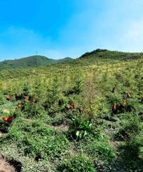内蒙古种植基地